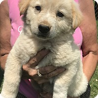 Adopt A Pet :: Brayden - Glastonbury, CT