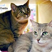 Adopt A Pet :: Freida & Franny - Oakville, ON