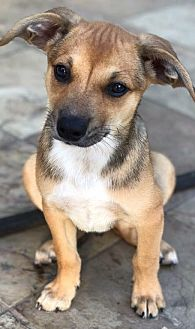 Terrier (Unknown Type, Medium) Mix Dog for adoption in Katy, Texas - WALDORF