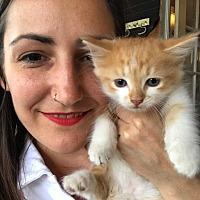 Adopt A Pet :: Buddy - Wantagh, NY