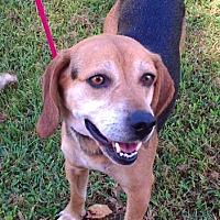 Adopt A Pet :: Allen - Metamora, IN