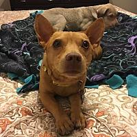 Adopt A Pet :: Eddie - Seattle, WA