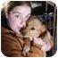 Photo 2 - Golden Retriever/Terrier (Unknown Type, Medium) Mix Puppy for adoption in Lexington, Missouri - Golden Retriever mix puppies