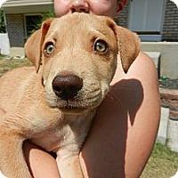 Adopt A Pet :: Ty - South Jersey, NJ