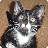 Adopt A Pet :: Bolt - Escondido, CA