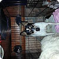 Adopt A Pet :: Jackie - New Washington, IN