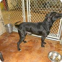 Adopt A Pet :: Thor - Terrell, TX