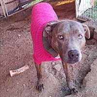 Adopt A Pet :: Meesha - Kingsland, TX