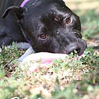 Adopt A Pet :: Blake - Jacksonville, FL