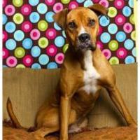 Adopt A Pet :: Kayo11252013 - Baton Rouge, LA