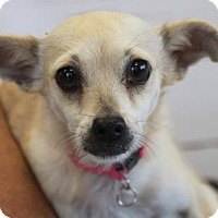 Adopt A Pet :: Laurie - Palm Springs, CA