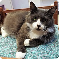 Adopt A Pet :: Fluffy - Grants Pass, OR