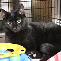 Adopt A Pet :: Jade - Carlisle, PA