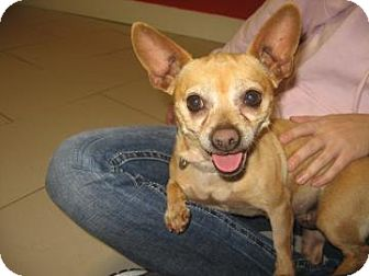 Chihuahua Mix Dog for adoption in Philadelphia, Pennsylvania - Baby