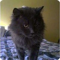 Adopt A Pet :: Big Boy - Hampton, CT