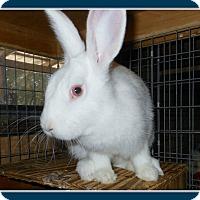 Adopt A Pet :: Piper - Williston, FL