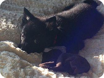 Shepherd (Unknown Type) Mix Puppy for adoption in Regina, Saskatchewan - Barkley