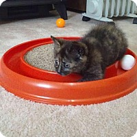 Adopt A Pet :: Diamond - McDonough, GA
