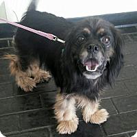 Adopt A Pet :: Peggy Sue - Sugarland, TX