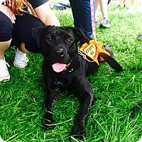 Adopt A Pet :: Patty - Miami, FL