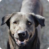 Labrador Retriever Mix Dog for adoption in Von Ormy, Texas - Baby