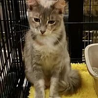 Adopt A Pet :: Lorna - Hallandale, FL
