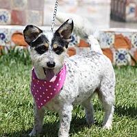 Adopt A Pet :: Bulma - Corona, CA
