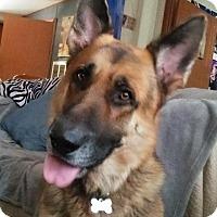 Adopt A Pet :: Eli - Green Cove Springs, FL
