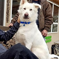 Adopt A Pet :: Lucky - Canterbury, CT