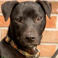 Adopt A Pet :: Finlander - Savannah, GA