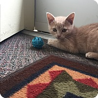 Adopt A Pet :: Sprite - Loveland, CO