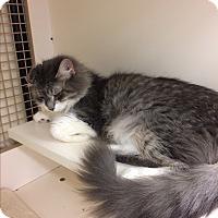 Adopt A Pet :: Sadie - Monroe, NY