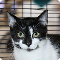 Adopt A Pet :: Chattanooga - Sarasota, FL
