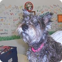 Adopt A Pet :: Gabby - Lockhart, TX
