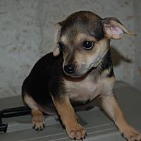 Adopt A Pet :: NASH - Lebanon, TN