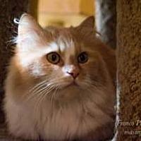 Adopt A Pet :: Sir Cai - Ennis, TX