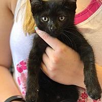 Adopt A Pet :: Drew - Island Park, NY