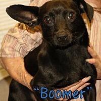 Adopt A Pet :: Boomer - Waycross, GA