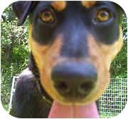 Rottweiler Mix Dog for adoption in Milledgeville, Georgia - Roxy