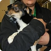 Adopt A Pet :: Mercedes ADOPTED!! - Antioch, IL