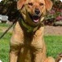 Adopt A Pet :: Jill - New Boston, NH