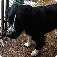 Adopt A Pet :: LOBO - Wanaque, NJ
