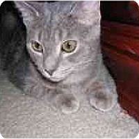 Adopt A Pet :: Jesse - Arlington, VA