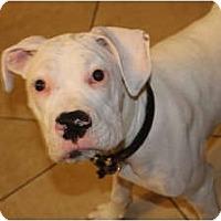 Adopt A Pet :: Tebow - ARDEN, NC