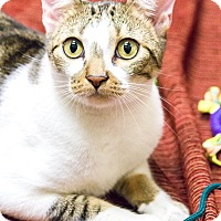 Adopt A Pet :: Clarence Darrow - Chicago, IL