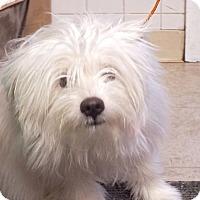 Adopt A Pet :: Marco - Tinton Falls, NJ