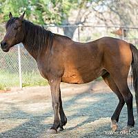 Adopt A Pet :: Layla - El Dorado Hills, CA