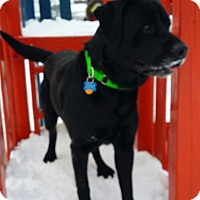 Adopt A Pet :: Zekie - Lewisville, IN