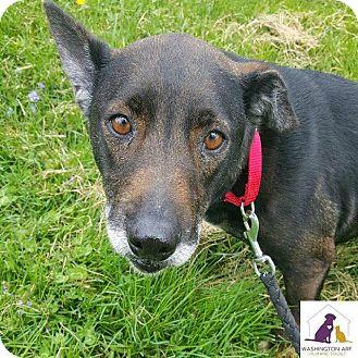 Terrier (Unknown Type, Medium)/Doberman Pinscher Mix Dog for adoption in Eighty Four, Pennsylvania - Bridget