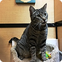 Adopt A Pet :: Connor - Riverside, CA